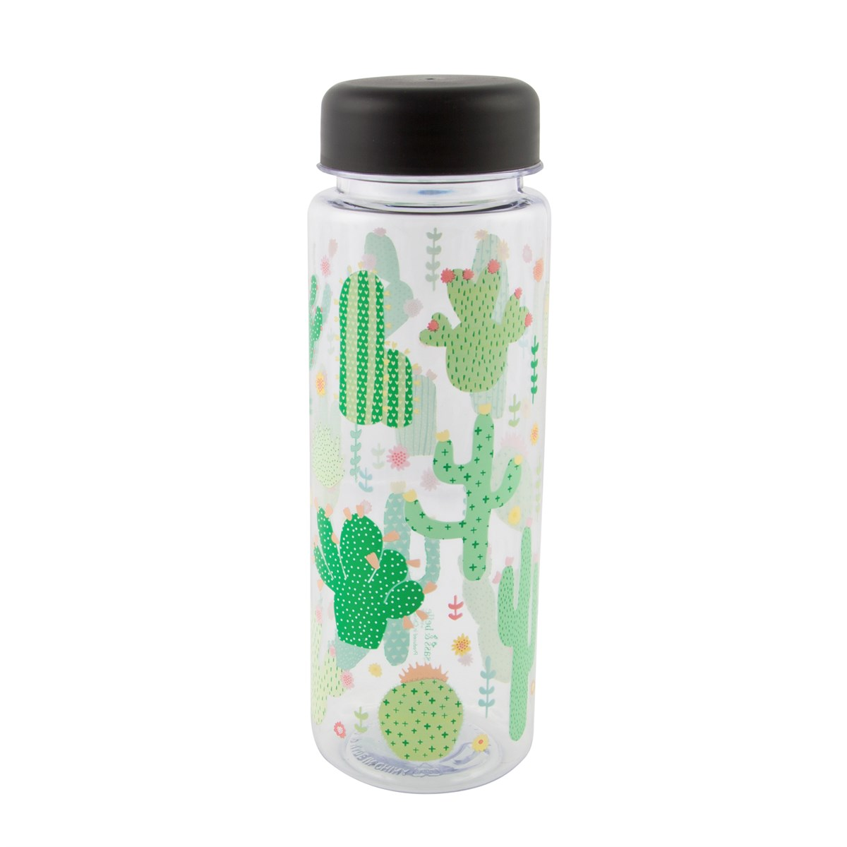 Cactus: how to water